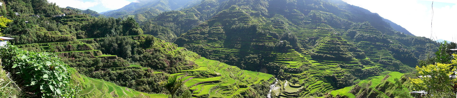 Pana_Banaue_Rice_Terraces.jpg